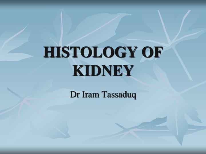 Histology of kidney