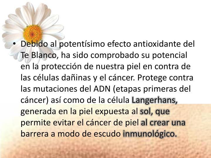 Debido al potentísimo efecto antioxidante del Te Blanco, ha sido comprobado su potencial en la protección de nuestra piel en contra de las células dañinas y el cáncer. Protege contra las mutaciones del ADN (etapas primeras del cáncer) así como de la célula