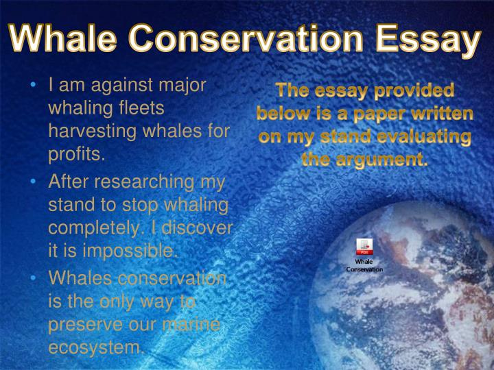 Whale Conservation Essay