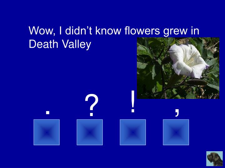 Wow, I didn't know flowers grew in