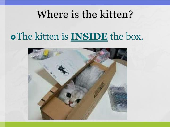 Where is the kitten