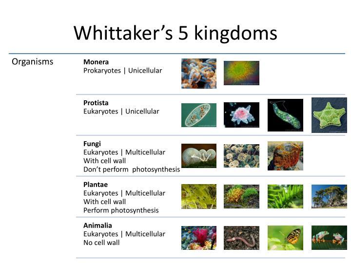 Whittaker's 5 kingdoms
