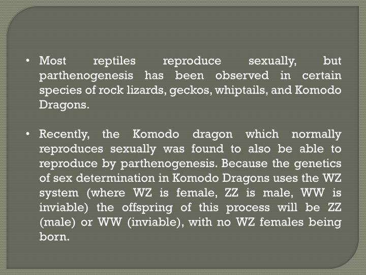 Most reptiles reproduce sexually, but parthenogenesis has been observed in certain species of rock lizards, geckos, whiptails, and Komodo