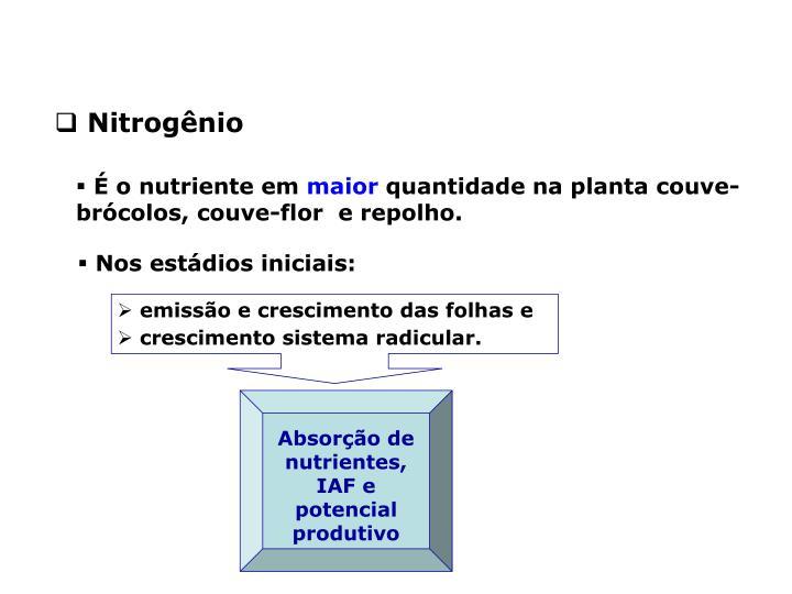 Absorção de nutrientes, IAF e potencial produtivo