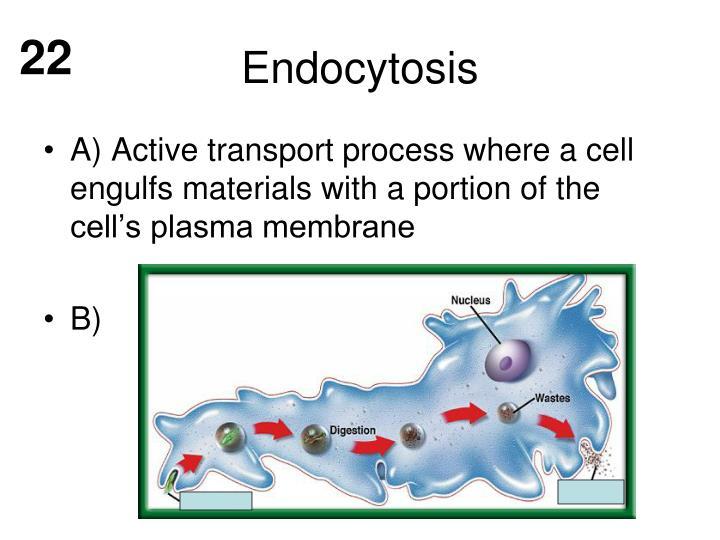Endocytosis