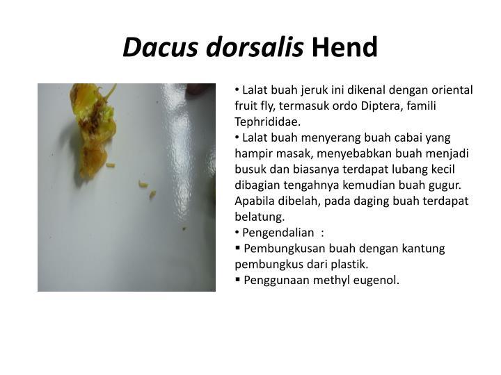 Dacus