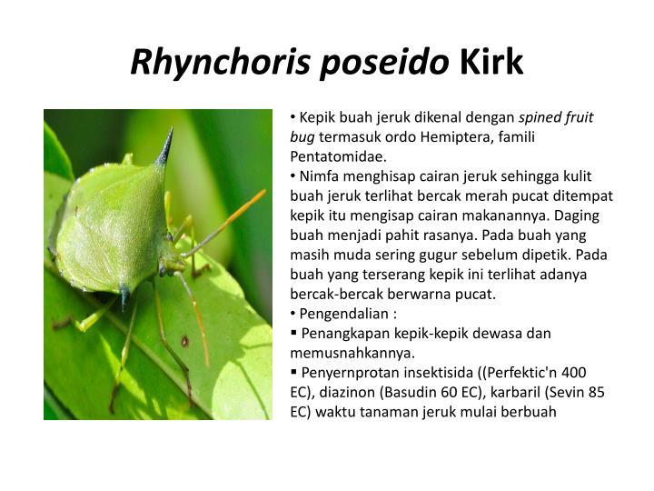 Rhynchoris