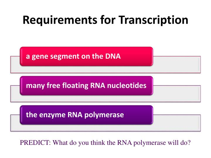 Requirements for Transcription