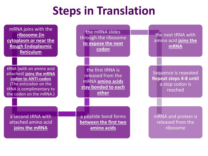 Steps in Translation
