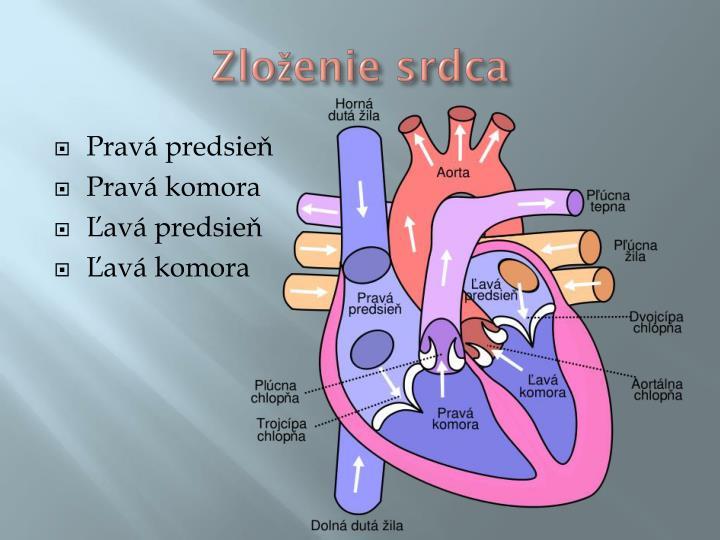 Zloženie srdca