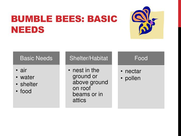 BUMBLE bees: Basic Needs