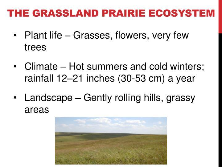 The Grassland prairie Ecosystem