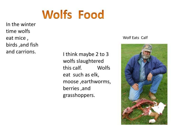 Wolfs  Food