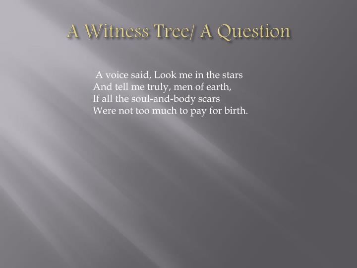 A Witness Tree/ A Question