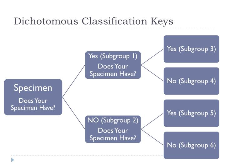 Dichotomous Classification Keys