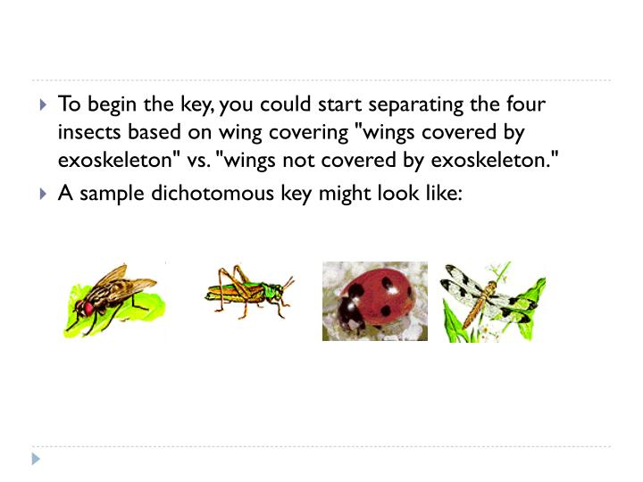 "To begin the key, you could start separating the four insects based on wing covering ""wings covered by exoskeleton"" vs. ""wings not covered by exoskeleton."""