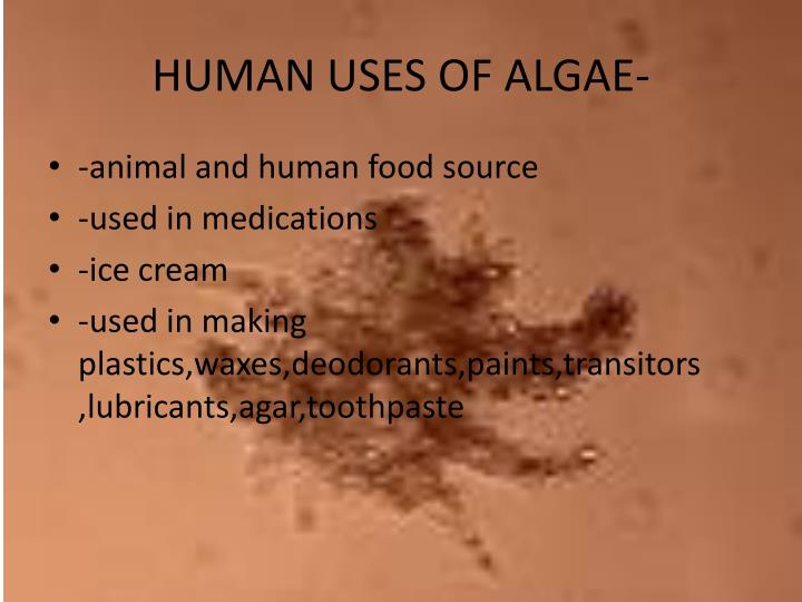 HUMAN USES OF ALGAE-