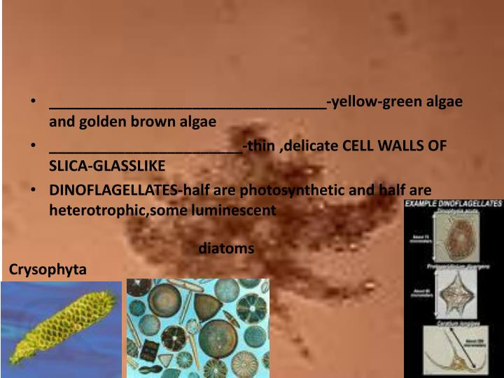_________________________________-yellow-green algae and golden brown algae