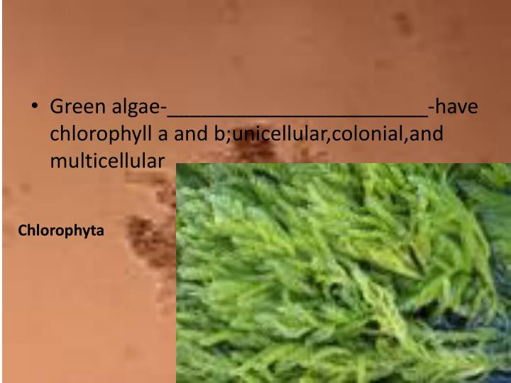 Green algae-_______________________-have chlorophyll a and
