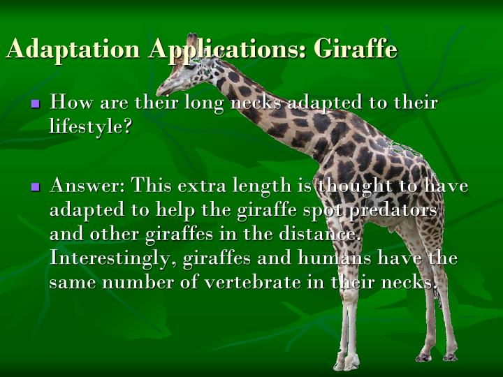 Adaptation Applications: Giraffe