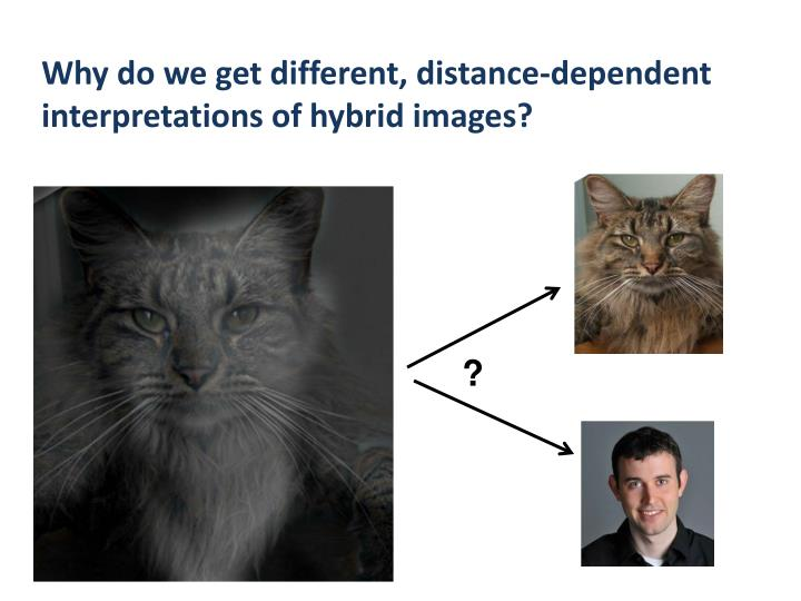 Why do we get different, distance-dependent interpretations of hybrid images?