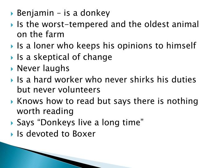 Benjamin – is a donkey