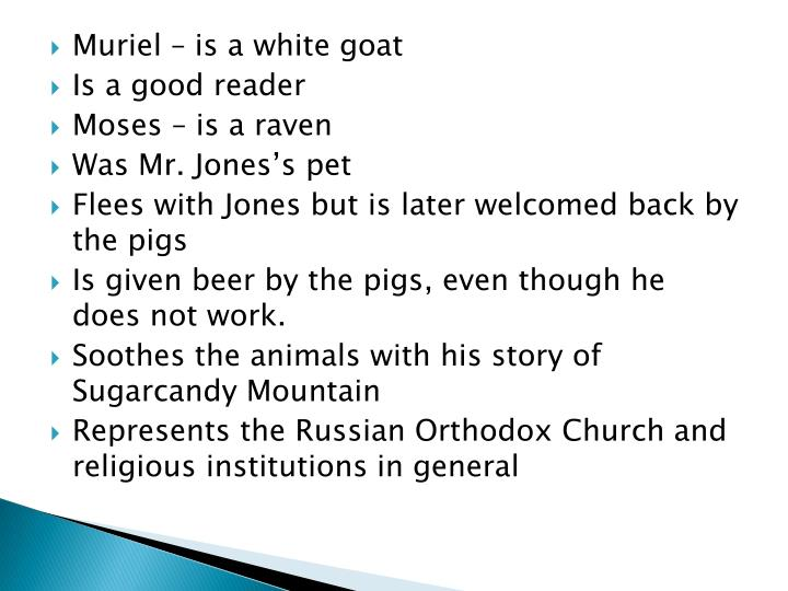 Muriel – is a white goat
