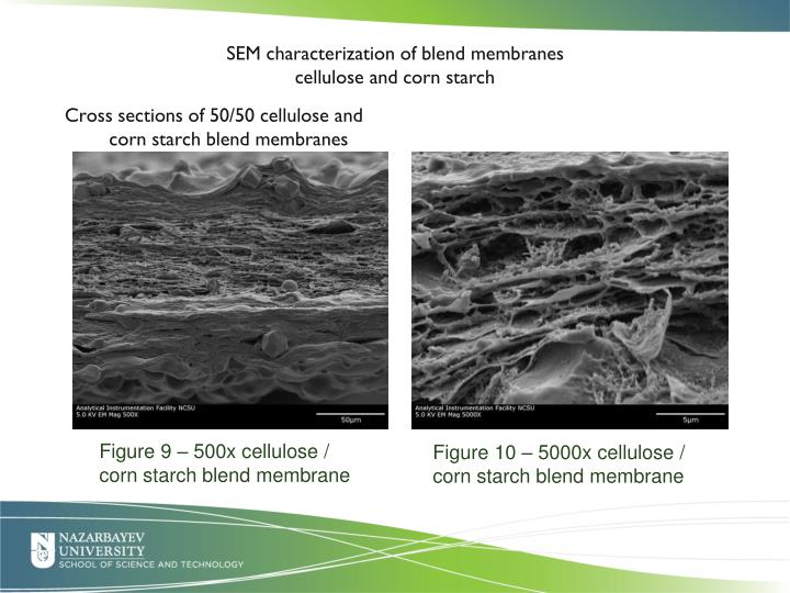 SEM characterization of blend membranes