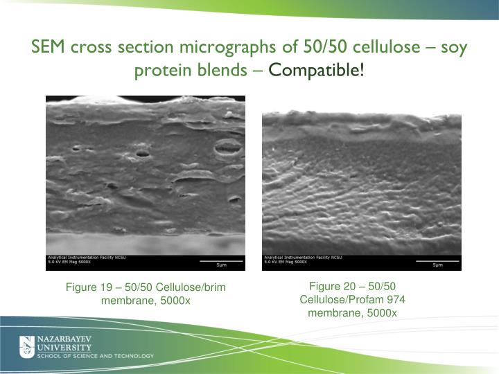 SEM cross section micrographs of 50/50 cellulose – soy protein blends –