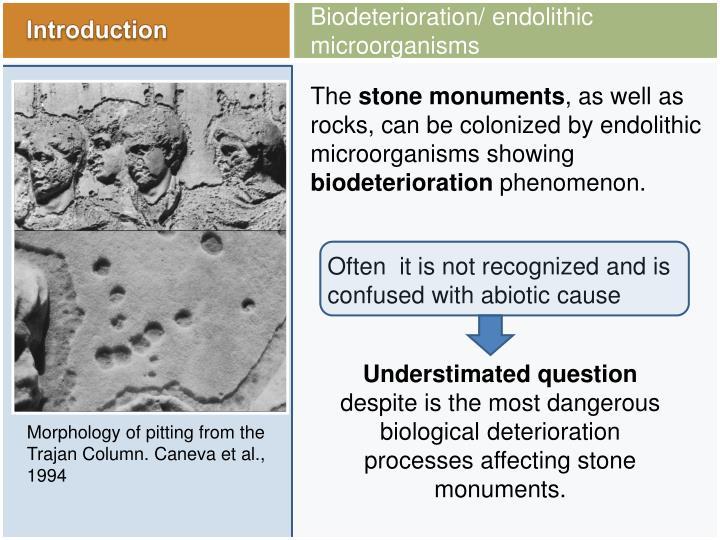 Biodeterioration/ endolithic microorganisms