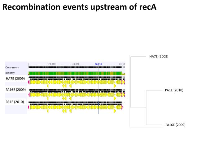 Recombination events upstream of