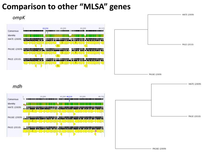 "Comparison to other ""MLSA"" genes"