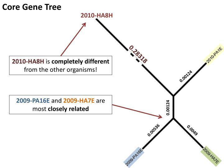 Core Gene Tree