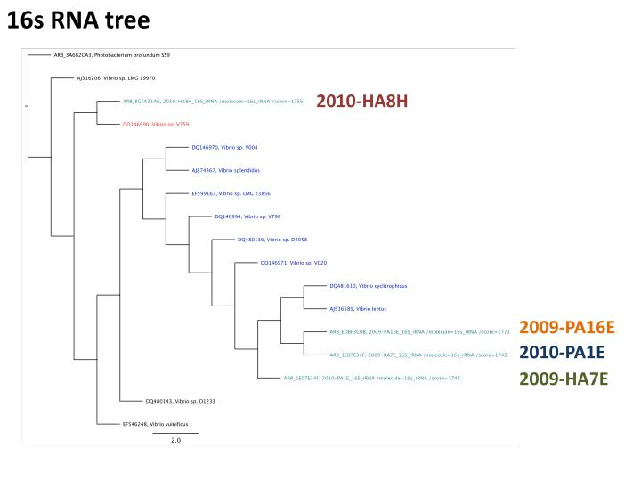 16s RNA tree