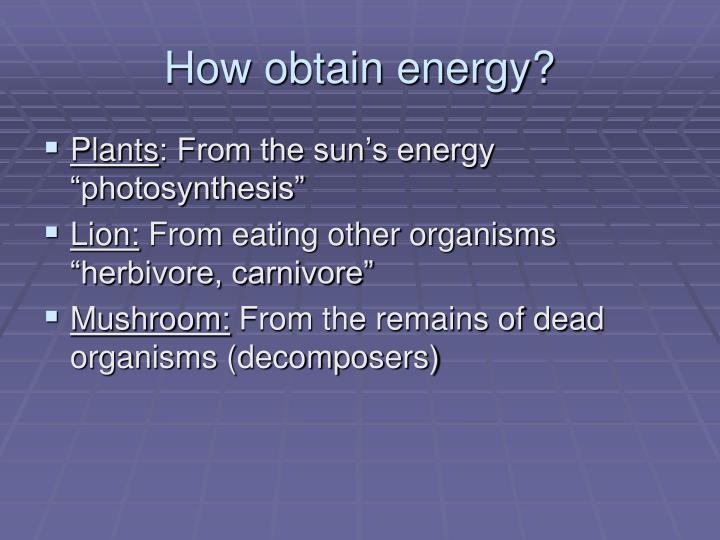 How obtain energy?