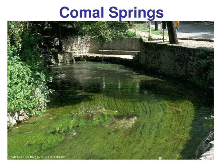 Comal Springs
