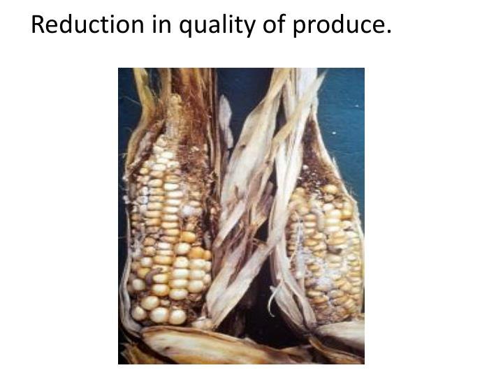 Reduction in quality of produce.