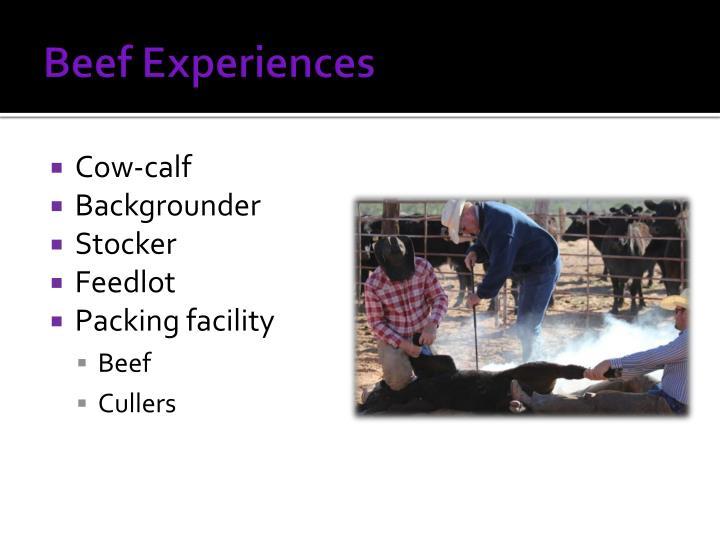Beef Experiences