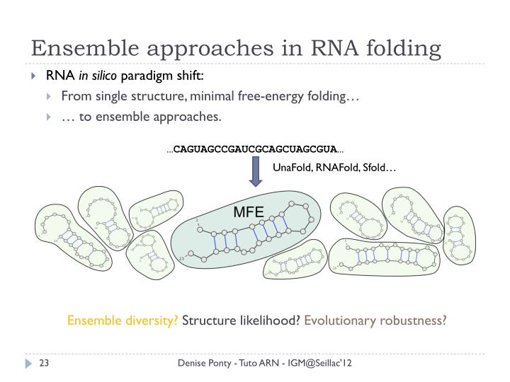 Ensemble approaches in RNA folding