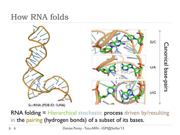How RNA folds