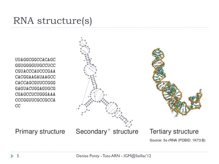 RNA structure(s)