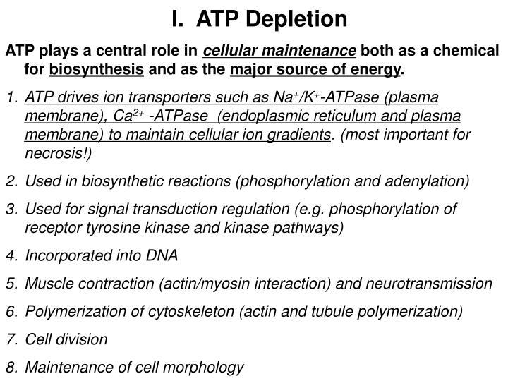I.  ATP Depletion