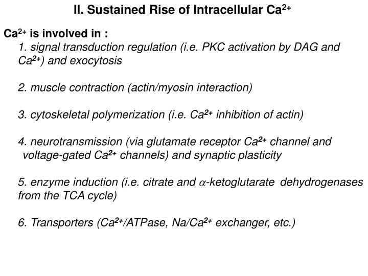 II. Sustained Rise of Intracellular Ca
