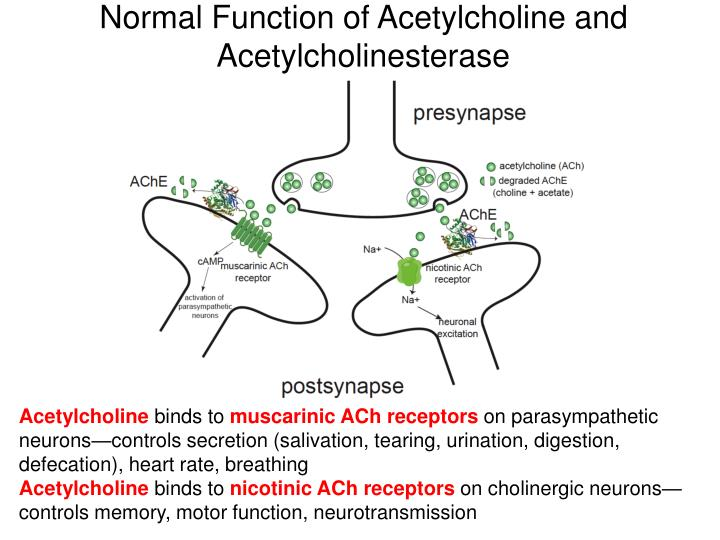 Normal Function of Acetylcholine and