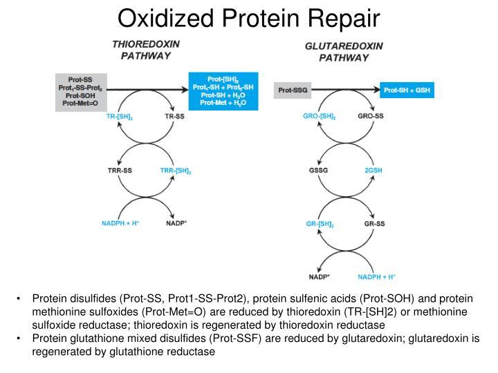 Oxidized Protein Repair