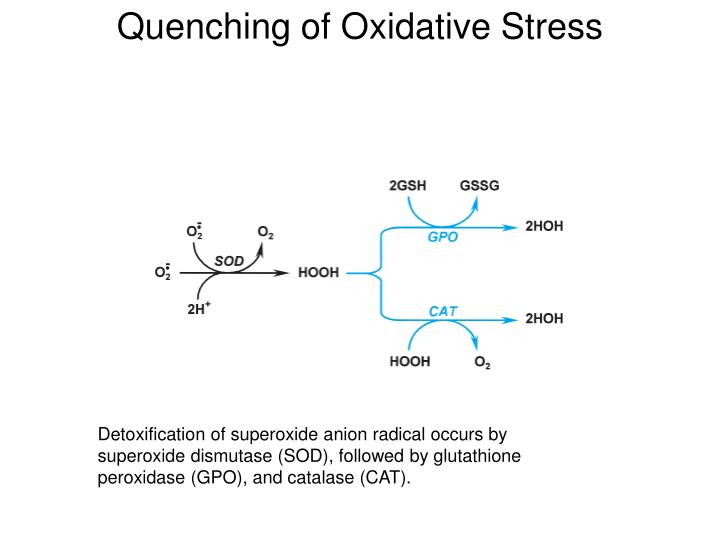 Quenching of Oxidative Stress