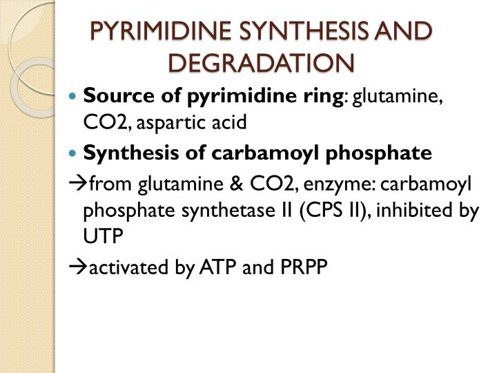 PYRIMIDINE SYNTHESIS AND DEGRADATION