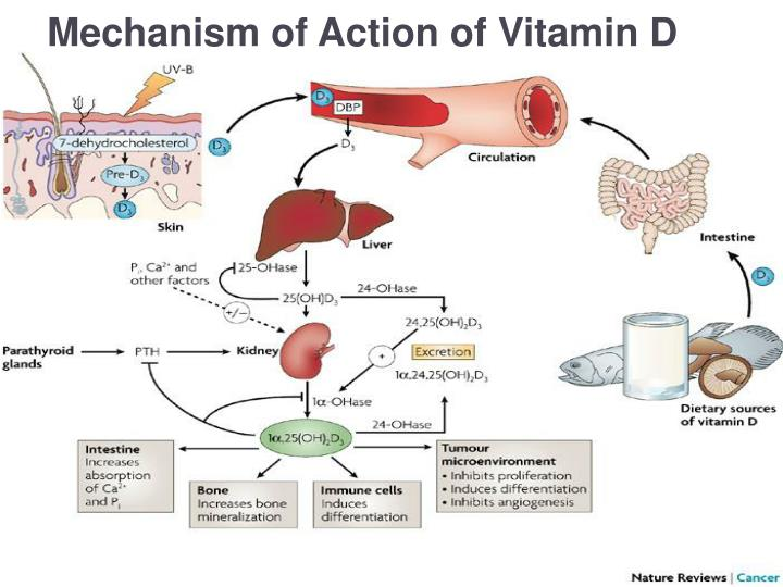 Mechanism of Action of Vitamin D