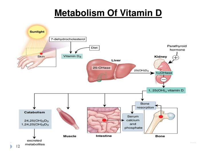 Metabolism Of Vitamin D