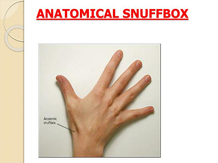 ANATOMICAL SNUFFBOX